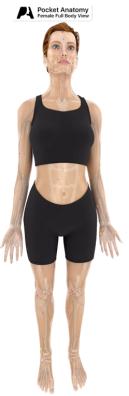 pocket-anatomy-001